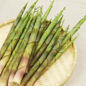 渋谷さんの月山筍(根曲がり竹)1kg(15本前後) 甘辛ナンバン味噌付|yamagata-umaies