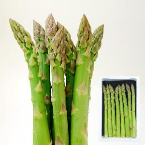 山形の極太アスパラガス500g[2Lサイズ]|yamagata-umaies