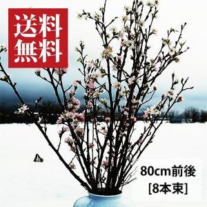 啓翁桜(けいおうざくら)[80cm8本束]|yamagata-umaies