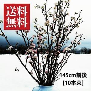 啓翁桜(けいおうざくら)[145cm10本束]|yamagata-umaies