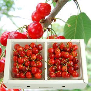 プレミアムさくらんぼ紅秀峰700gバラ詰Lサイズ以上(350g×2)|yamagata-umaies