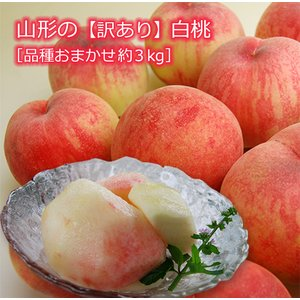 《訳あり》山形の白桃 品種おまかせ約3kg(7〜15玉) yamagata-umaies
