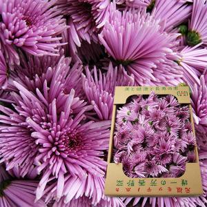 山形の食用菊もってのほか[品種おまかせ]1kg|yamagata-umaies