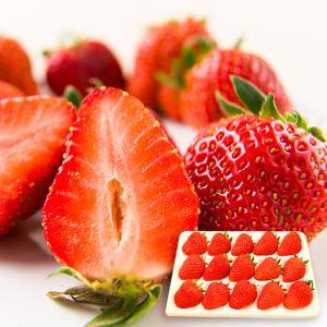 朝摘みいちご紅ほっぺ[15粒入]|yamagata-umaies