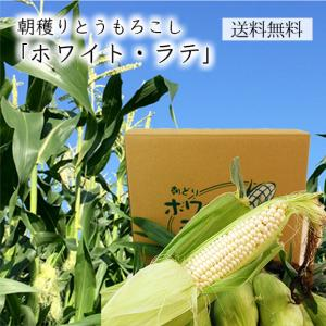 朝穫りとうもろこしホワイト・ラテ(10〜12本程度)|yamagata-umaies