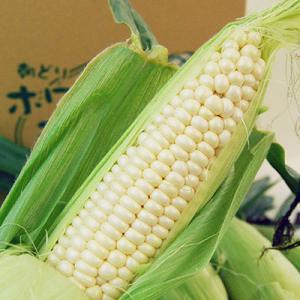 朝穫りとうもろこしホワイト・ラテ(10〜12本程度)|yamagata-umaies|02