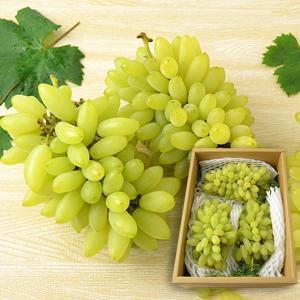 松田さんのぶどうピッテロビアンコ約1.5kg(2〜3房)|yamagata-umaies