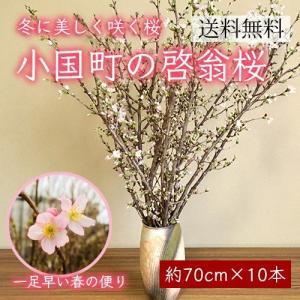 小国町の啓翁桜[約70cm×10本]|yamagata-umaies