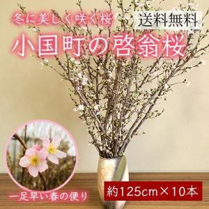 小国町の啓翁桜[約125cm×10本]|yamagata-umaies