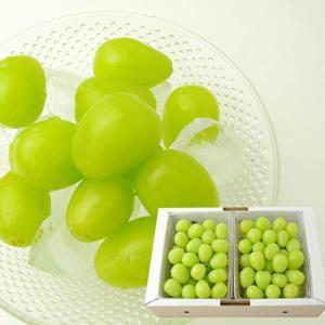 山形本沢ぶどうシャインマスカット1kg(500gパック×2)|yamagata-umaies