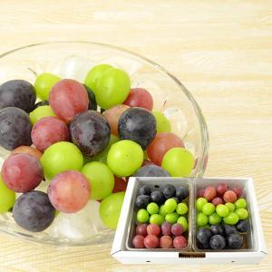山形本沢ぶどう3種詰め合わせ1kg(500gパック×2)|yamagata-umaies