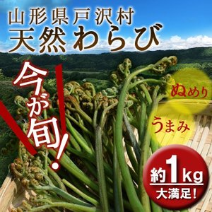 父の日 ギフト プレゼント 山形県 戸沢村産 天然わらび 約1kg 送料無料|yamagatamaru