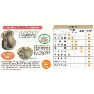 川井『ココナッツ 皿巣』の詳細画像3
