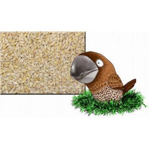 朝日商事『大麦 1kg』