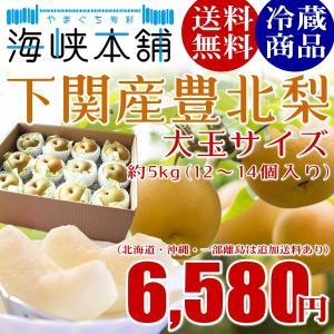 下関産朝獲れ豊北梨4Lサイズ大玉 5kg (12個入り) 山...