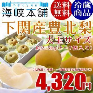 下関産朝獲れ豊北梨4Lサイズ大玉 2.5kg (6個入り) ...