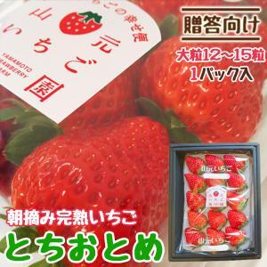 いちご 贈答用 とちおとめ 山元町産 朝摘みいちご大粒15粒 1パック|yamamoto-ichigo15