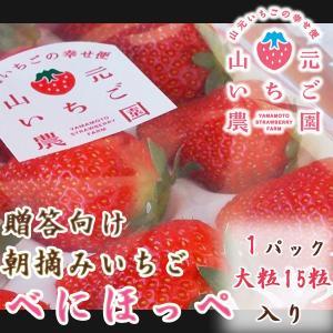 いちご 贈答用 べにほっぺ 山元町産 朝摘みいちご大粒15粒 1パック|yamamoto-ichigo15