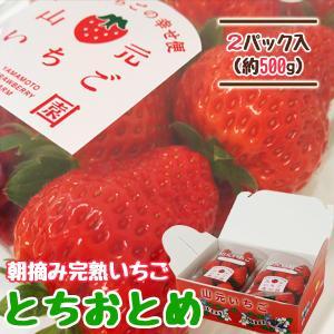 いちご とちおとめ 山元町産 朝摘みいちご2パック|yamamoto-ichigo15
