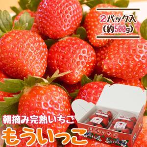 いちご もういっこ 山元町産 朝摘みいちご2パック|yamamoto-ichigo15