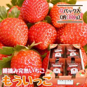 いちご もういっこ 山元町産 朝摘みいちご4パック|yamamoto-ichigo15