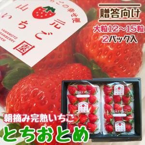 いちご 贈答用 とちおとめ 山元町産 朝摘みいちご大粒15粒 2パック|yamamoto-ichigo15