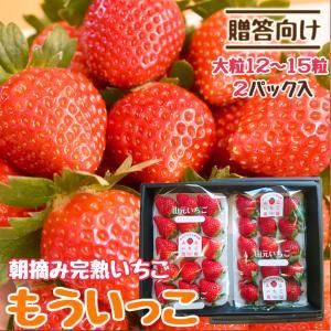 いちご 贈答用 もういっこ 山元町産 朝摘みいちご大粒15粒 2パック|yamamoto-ichigo15