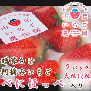いちご 贈答用 べにほっぺ 山元町産 朝摘みいちご大粒15粒 2パック|yamamoto-ichigo15
