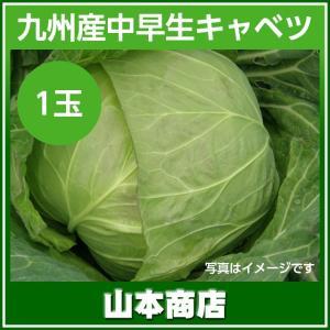 中早生キャベツ 1玉 九州産