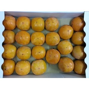 訳あり新モノ福岡県産 富有柿  4kg