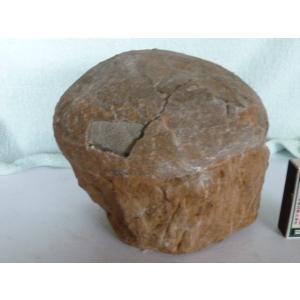 恐竜の化石です 商品は基本は宅配便で発送します