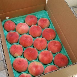 ご予約商品【農家産直】【ギフト】【送料無料】【桃】【取り寄せ】【フルーツ】山梨の美味しい桃(早生種5K M/18-20個入り)|yamanasi