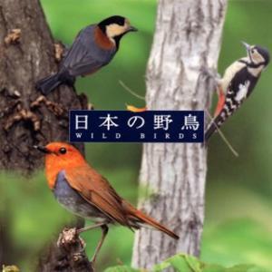 自然音 日本の野鳥|yamano