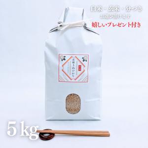 お米 5kg  29年産 京都産 キヌヒカリ 玄米5kg×1...