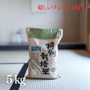 お米 5kg 特A 特別栽培米 石見銀山 つや姫 令和元年産 白米 5kg|yamasina