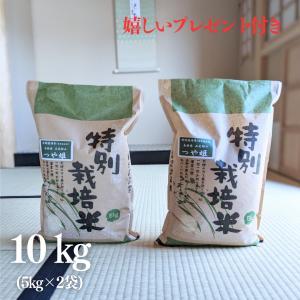 お米 10kg 特A 特別栽培米 島根県 石見銀山 つや姫 令和元年産  白米 5kg×2袋|yamasina