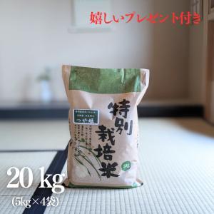 お米 20kg 特A 特別栽培米 島根県 石見銀山 つや姫 令和元年産 白米5kg×4袋|yamasina