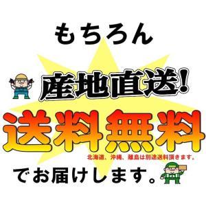【予約開始】和歌山県産 訳あり みかん 大玉 (2Lサイズ以上) 10kg (傷あり サイズ不揃い )【送料無料】 *こちらの商品はリサイクル箱(古箱)でお届け。 yamatanet 05