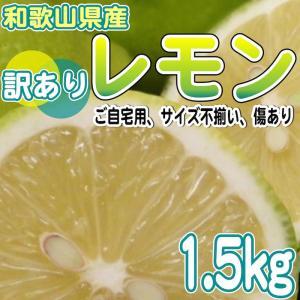 【お試し】和歌山県産  訳あり レモン 1.5kg(サイズ不揃い、傷あり)【送料無料】*防腐剤不使用、ノーワックス yamatanet