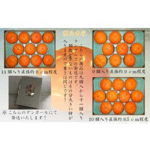 会津みしらず柿2L以上(9〜11個入り)2.5kg|yamautifruit|07