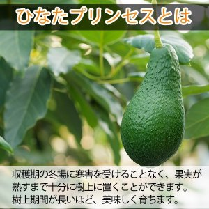 横山果樹園の「ひなたプリンセス(国産アボカド)」【Mサイズ1玉 約250g】ギフト箱入り|yao800|03