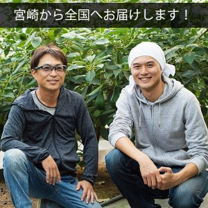 横山果樹園の「ひなたプリンセス(国産アボカド)」【Mサイズ1玉 約250g】ギフト箱入り|yao800|08