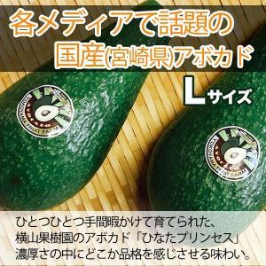 横山果樹園の「ひなたプリンセス(国産アボカド)」【Lサイズ1玉 約300g】ギフト箱入り|yao800|02