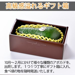 横山果樹園の「ひなたプリンセス(国産アボカド)」【Lサイズ1玉 約300g】ギフト箱入り|yao800|05