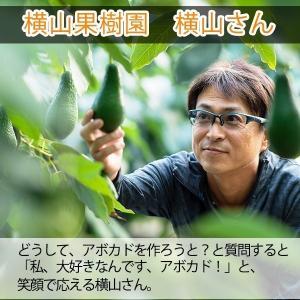 【12月中旬より順次発送予定】横山果樹園の「ひなたプリンセス(国産アボカド)」【2Lサイズ1玉 約350g】ギフト箱入り|yao800|04