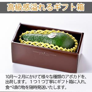 【12月中旬より順次発送予定】横山果樹園の「ひなたプリンセス(国産アボカド)」【2Lサイズ1玉 約350g】ギフト箱入り|yao800|05