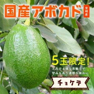 【5玉限定!】横山果樹園の「チョケテ(国産アボカド)1玉」ギフト箱入り|yao800