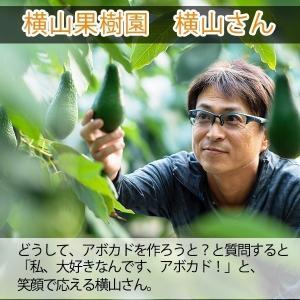 【5玉限定!】横山果樹園の「チョケテ(国産アボカド)1玉」ギフト箱入り|yao800|02