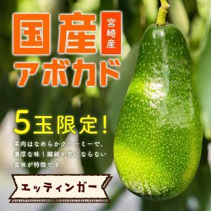 【完売!】横山果樹園の「エッティンガー(国産アボカド)1玉」ギフト箱入り|yao800