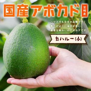 横山果樹園の「カハルー(国産アボカド)小サイズ1玉」ギフト箱入り|yao800